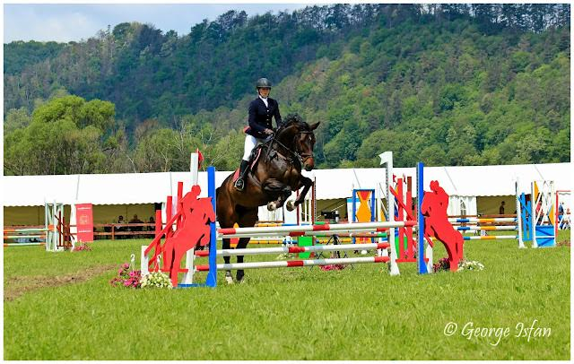 Enya  Big, strong sport horse competing show jumping & dressage.