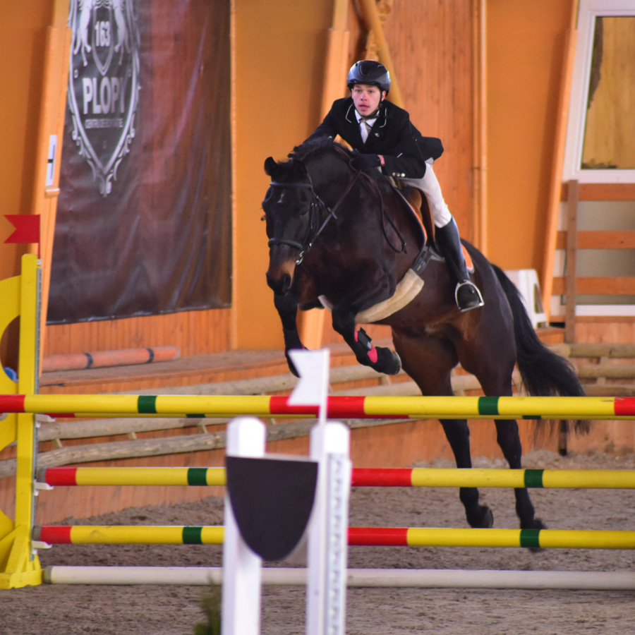 Comandor  Super great horse for experienced riders. Succesful in competitions!