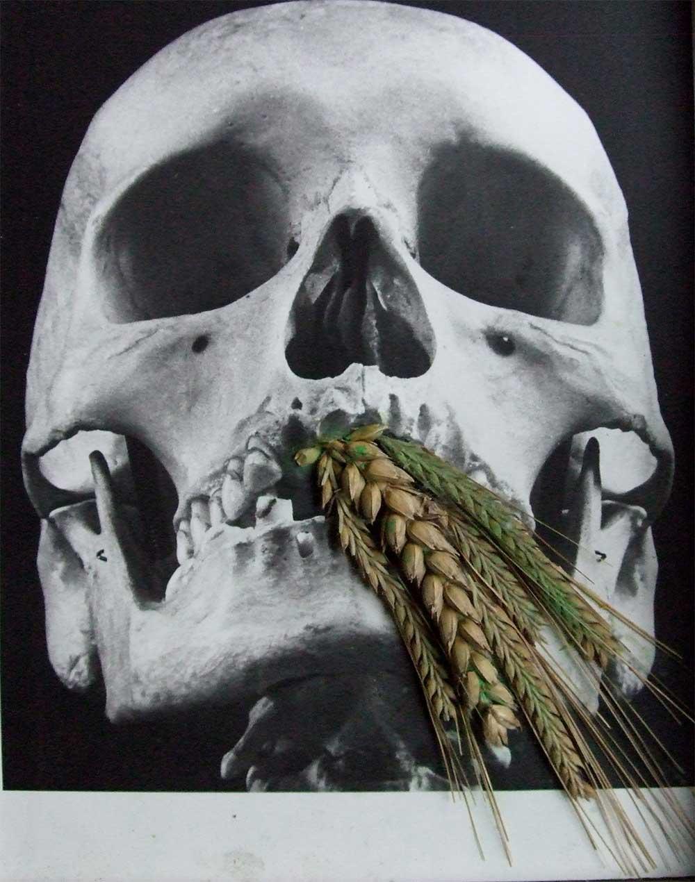 scull corn.jpg