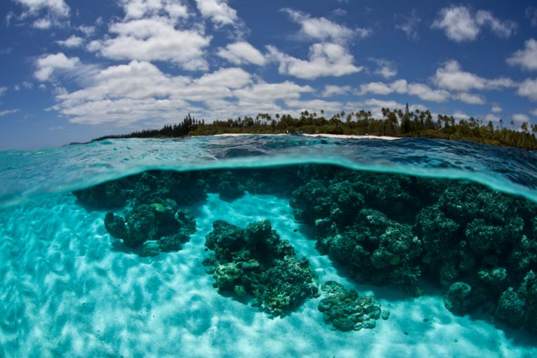 Amazing capture in New Caledonia from  Earth Times