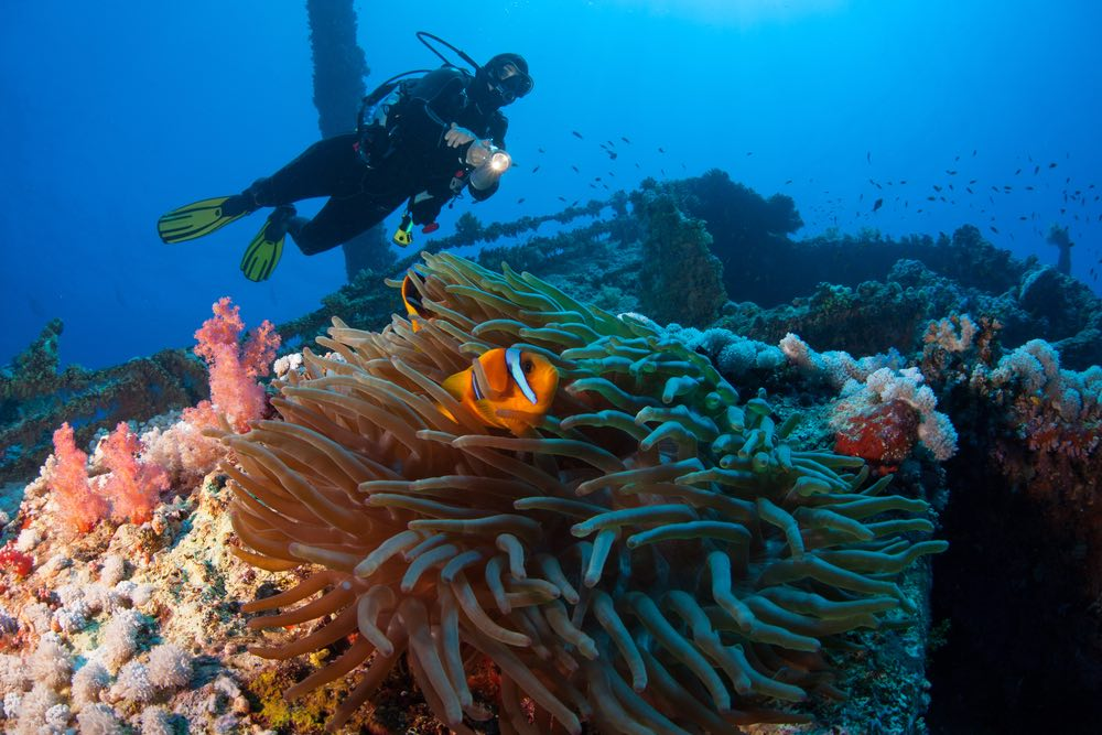 Dive on  BAMARANDI