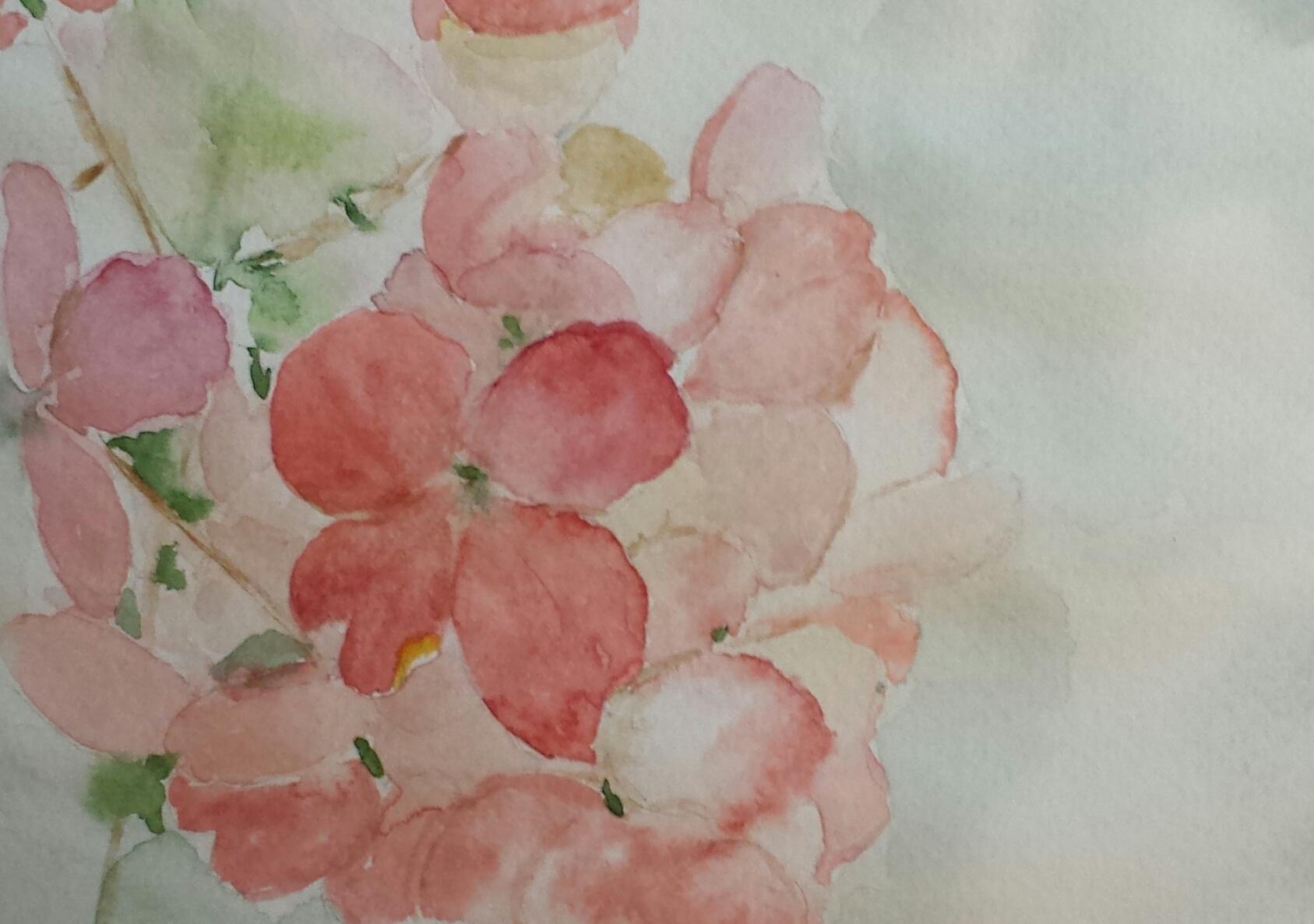 Hydrangea, 2016, watercolor.