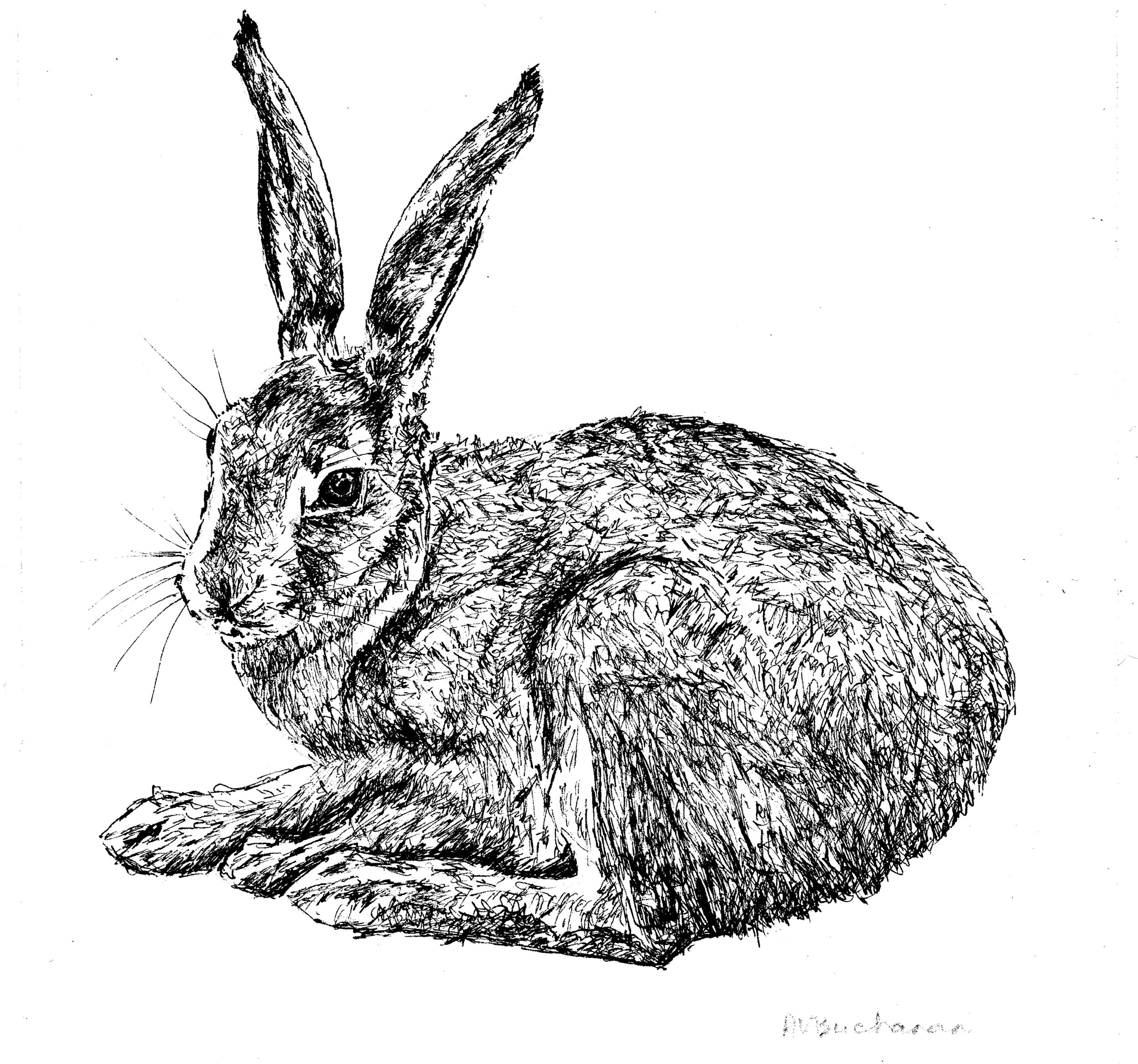Rabbit, pen and ink, 2016