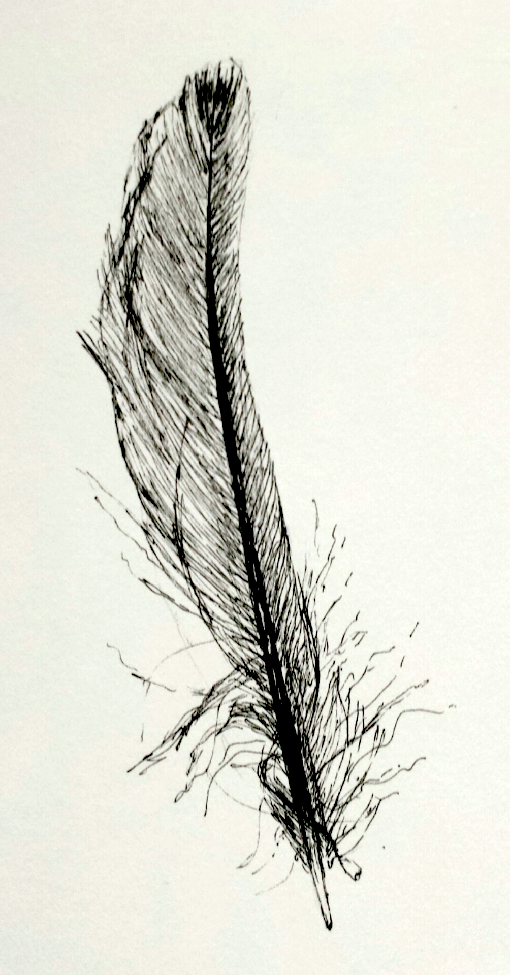 Feather, pen and ink, 2016