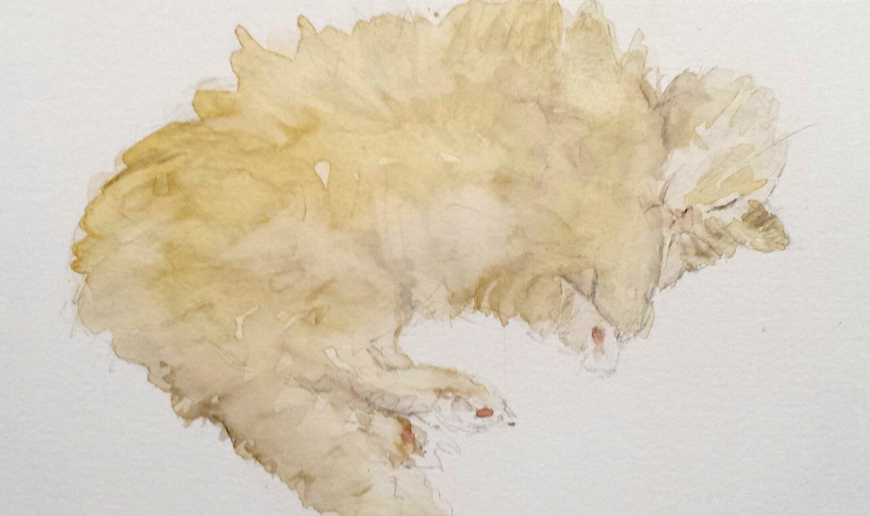 Sleeping cat, watercolor, 2016