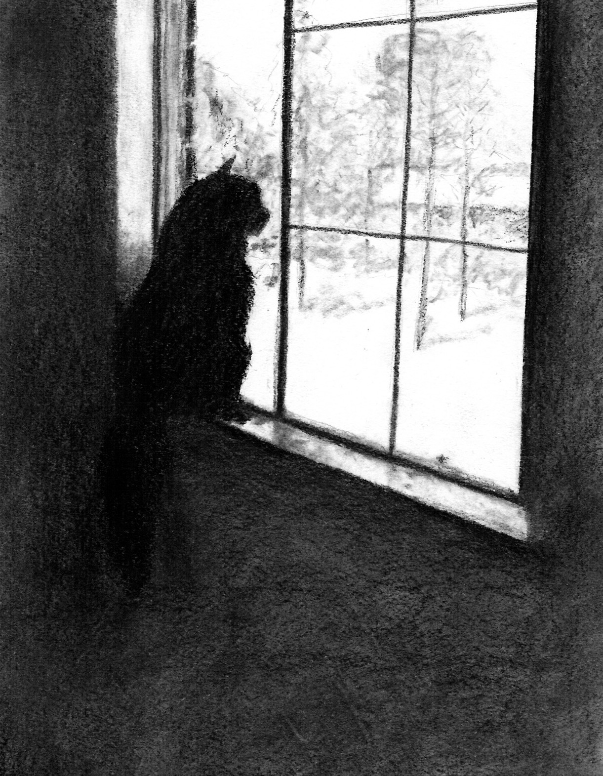 Cat at the window; charcoal; 2017