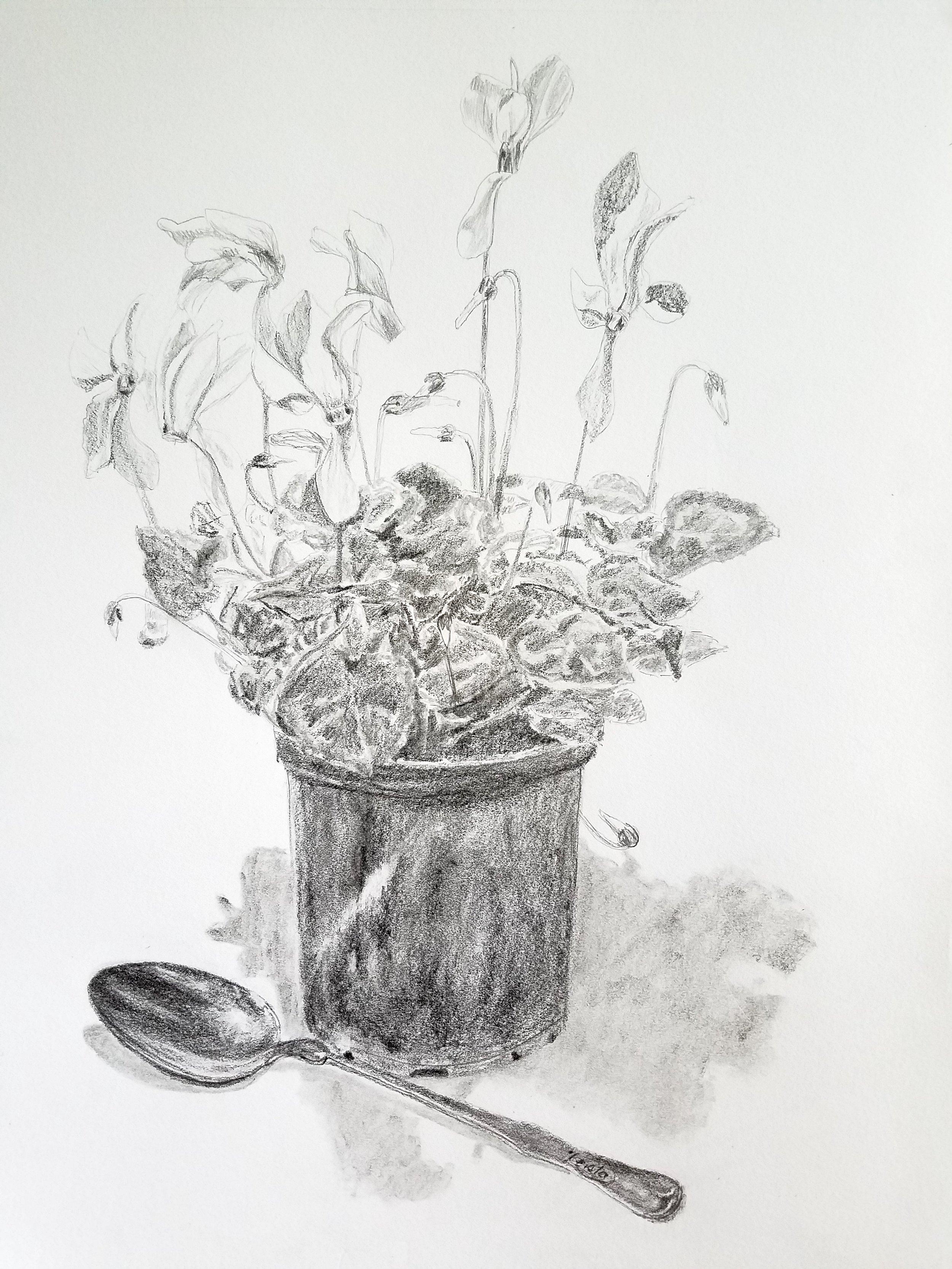 Cyclamen and Silver Spoon; graphite; 2017