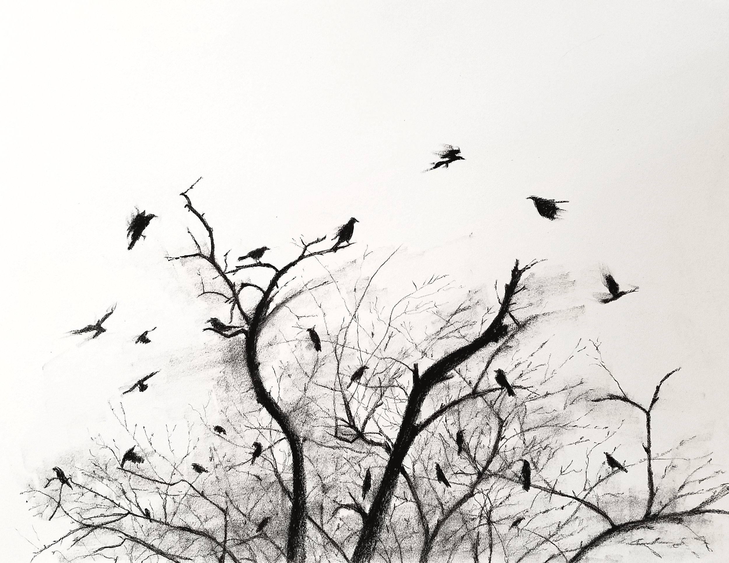 Crows; charcoal; 2017