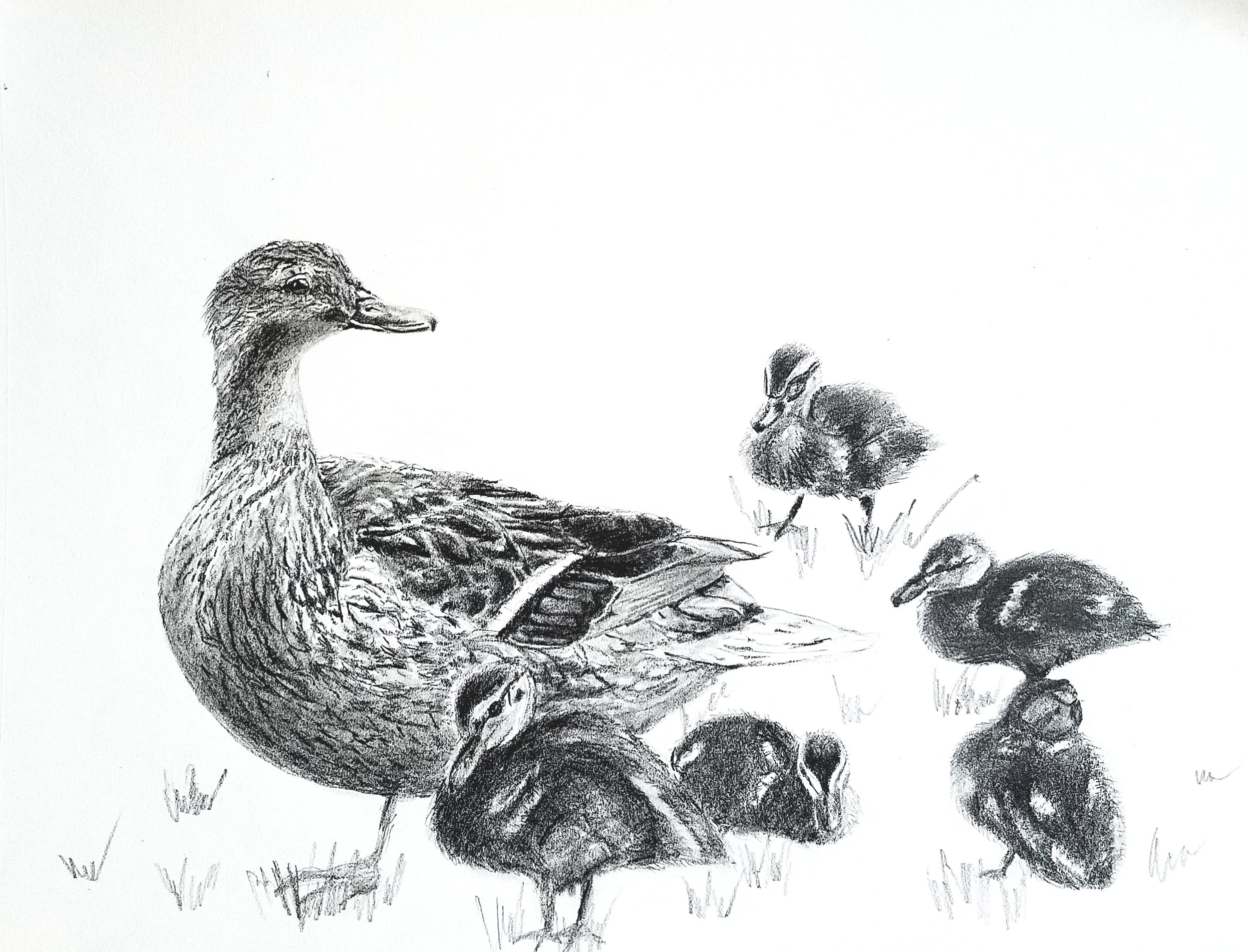 Ducklings; graphite; 2018