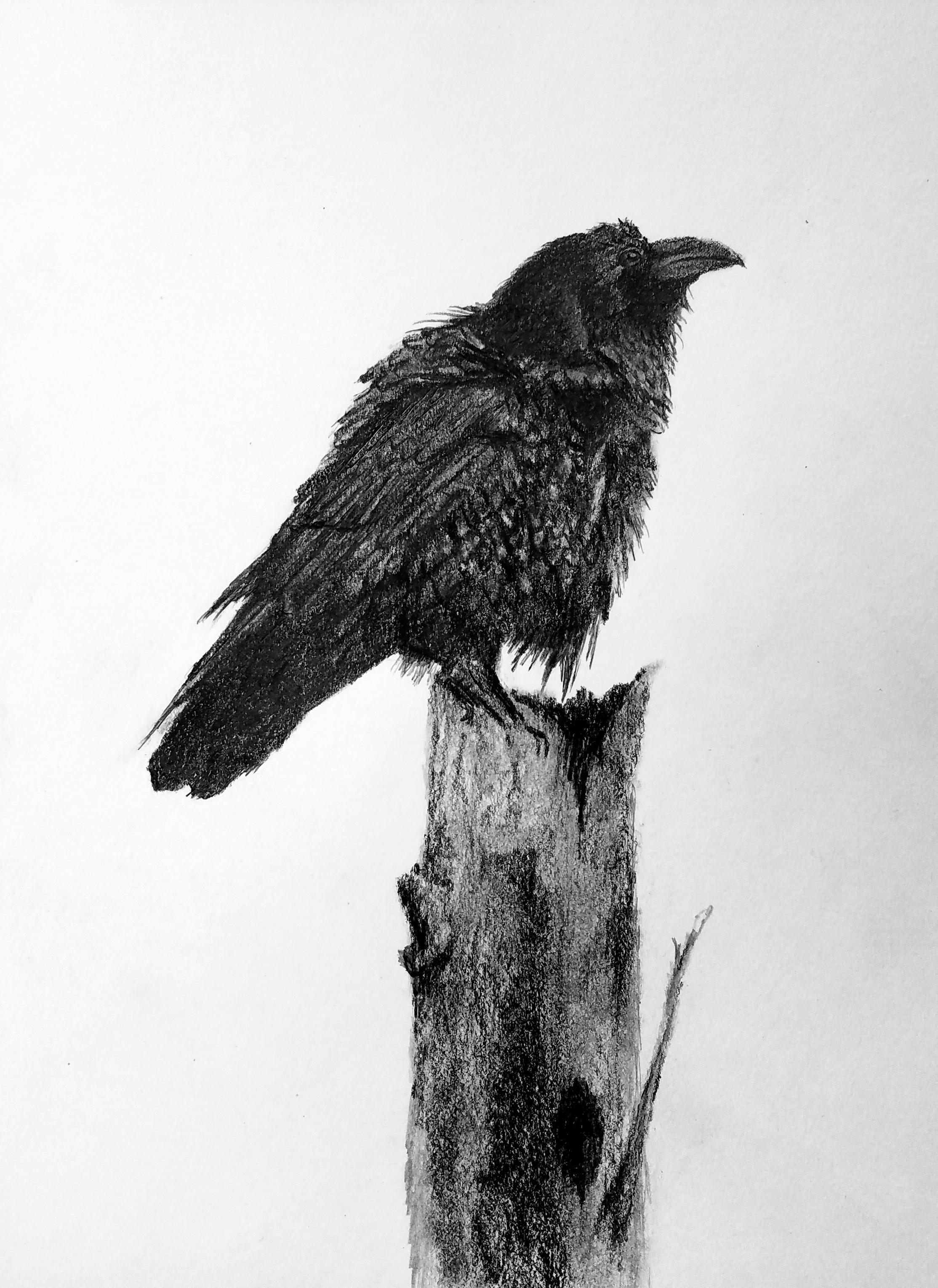Raven; graphite; 2018