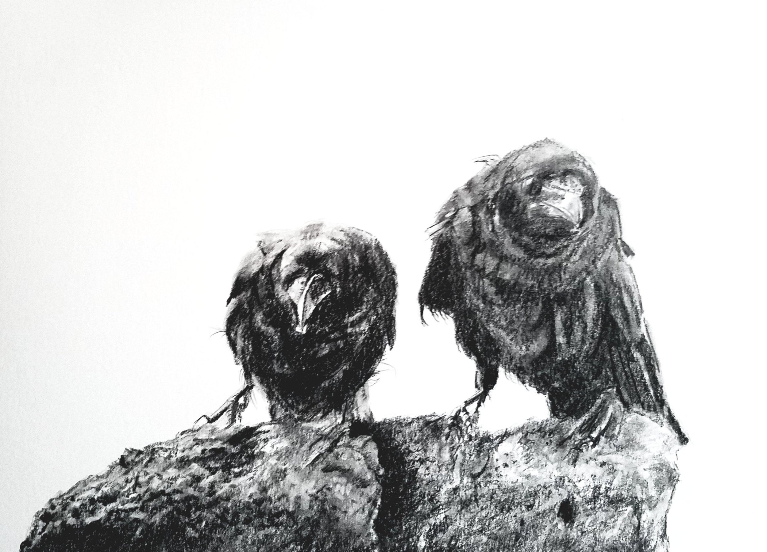 Ravens; graphite; 2019