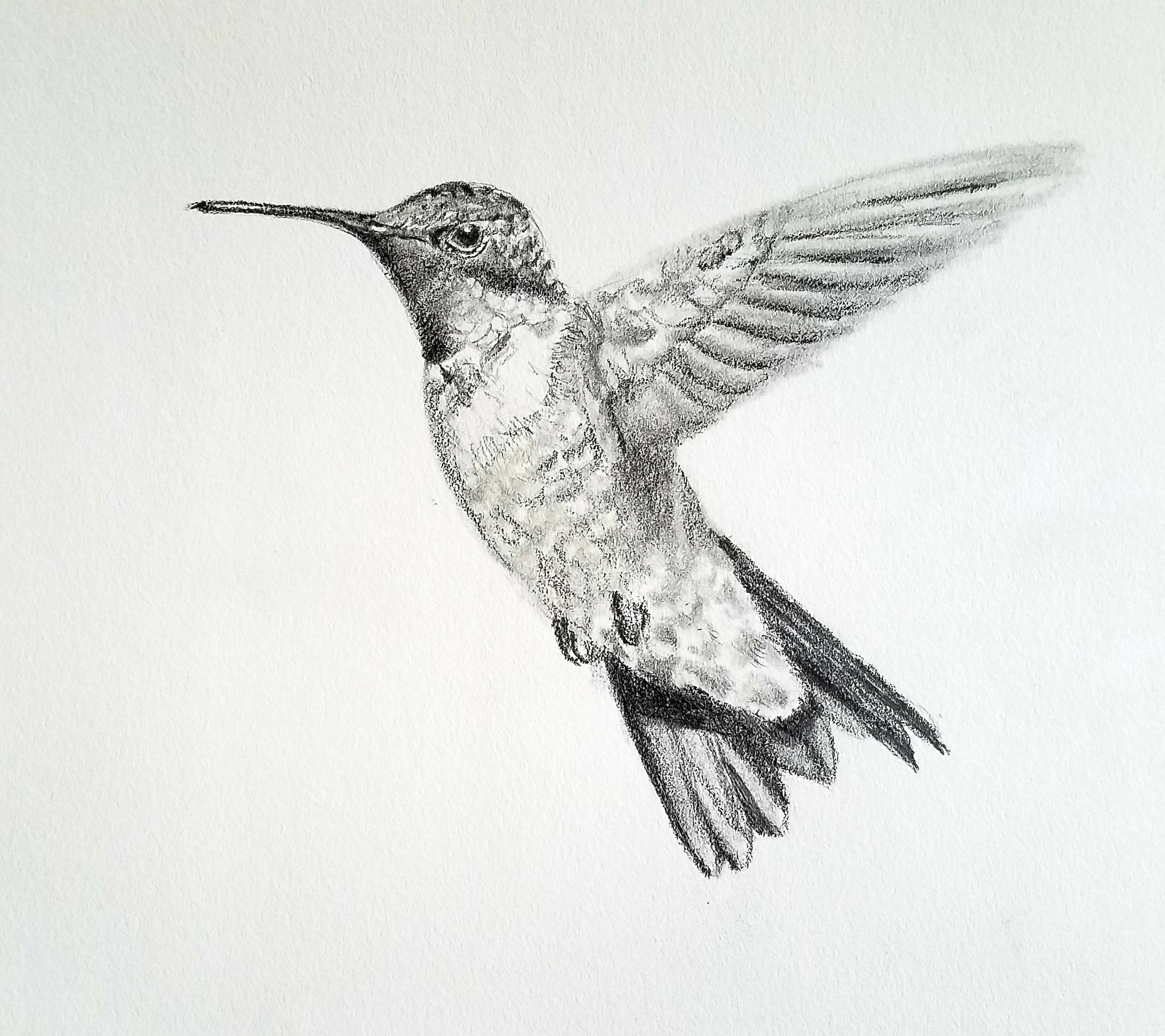 Ruby-throated Hummingbird; graphite; 2019