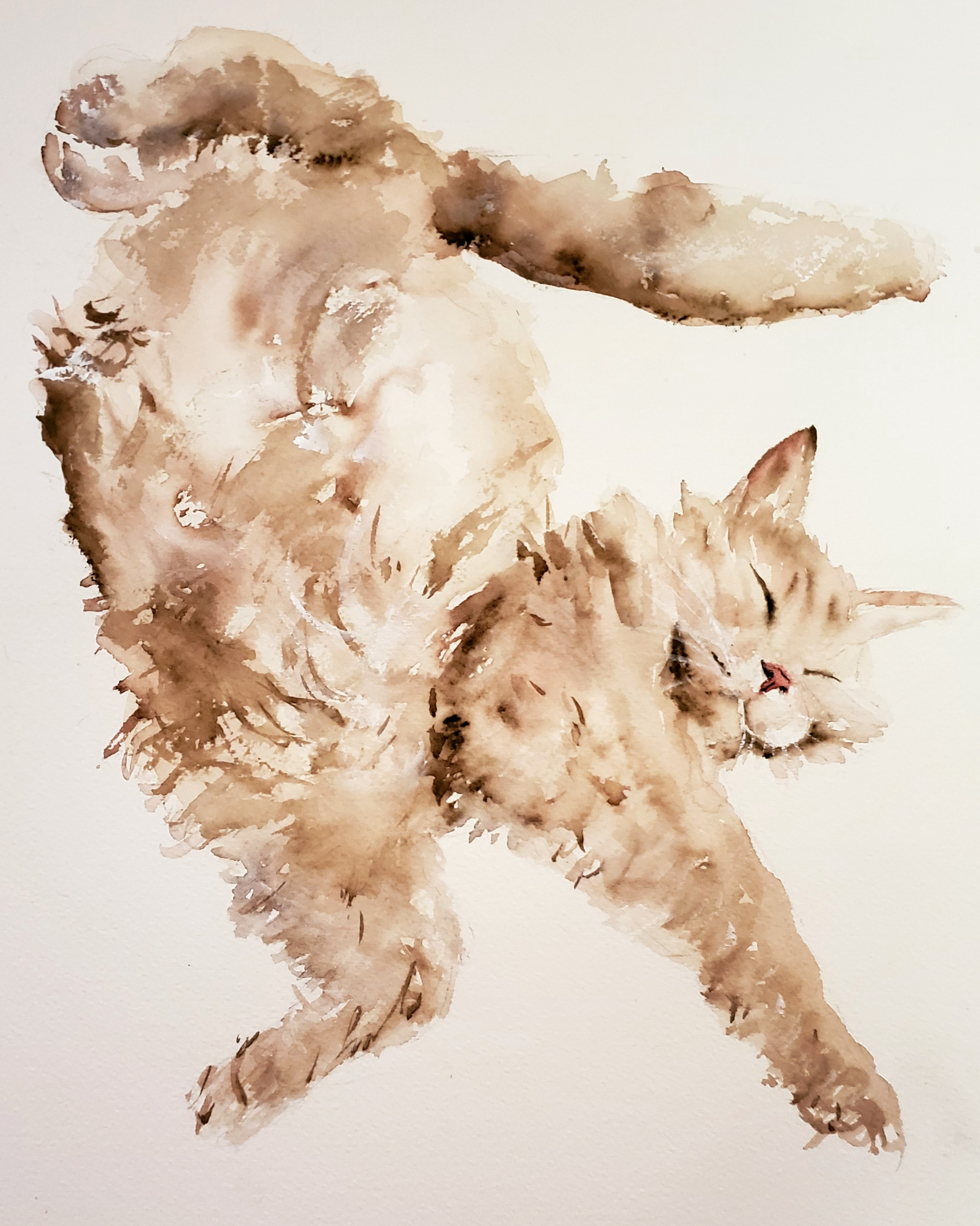 Sleeping cat; watercolor; 2019