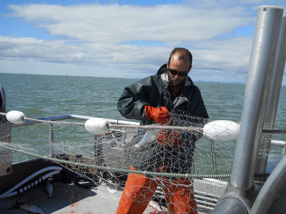 Captain Josh picking a salmon out of the net.