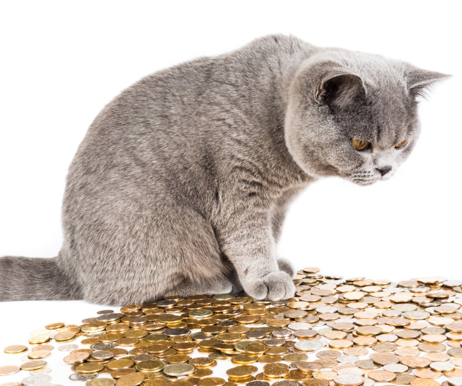 catwithmoney.png