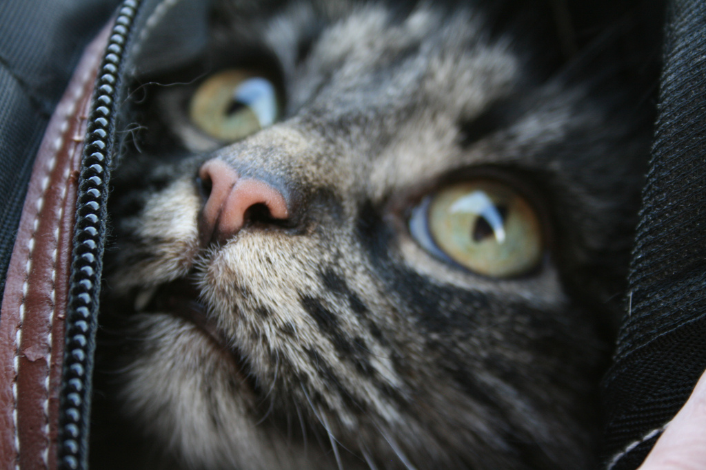 Do you have trouble getting your cat excited about going to the vet? -