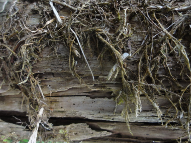 wabi-wabi: a close-up image of decaying wood in West Wales