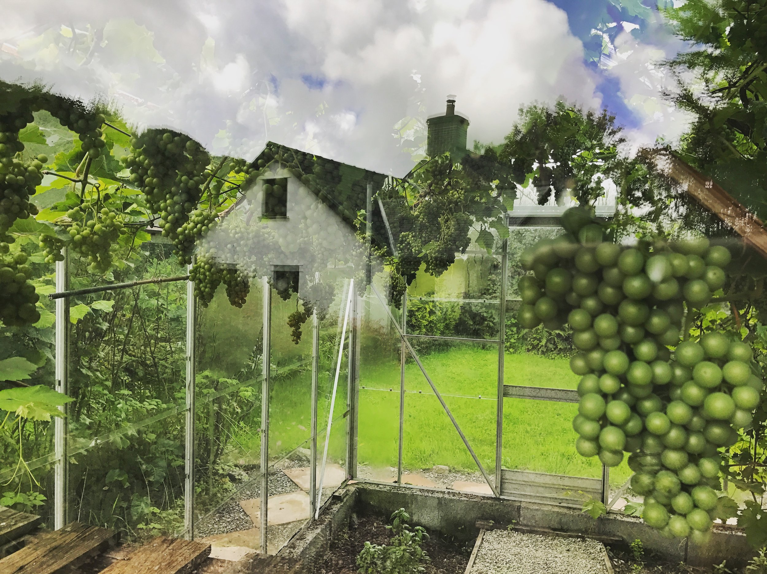 The house at Tyn y parc and the greenhouse with its mature grape vine. Photo by Sophie Stone, 2017.