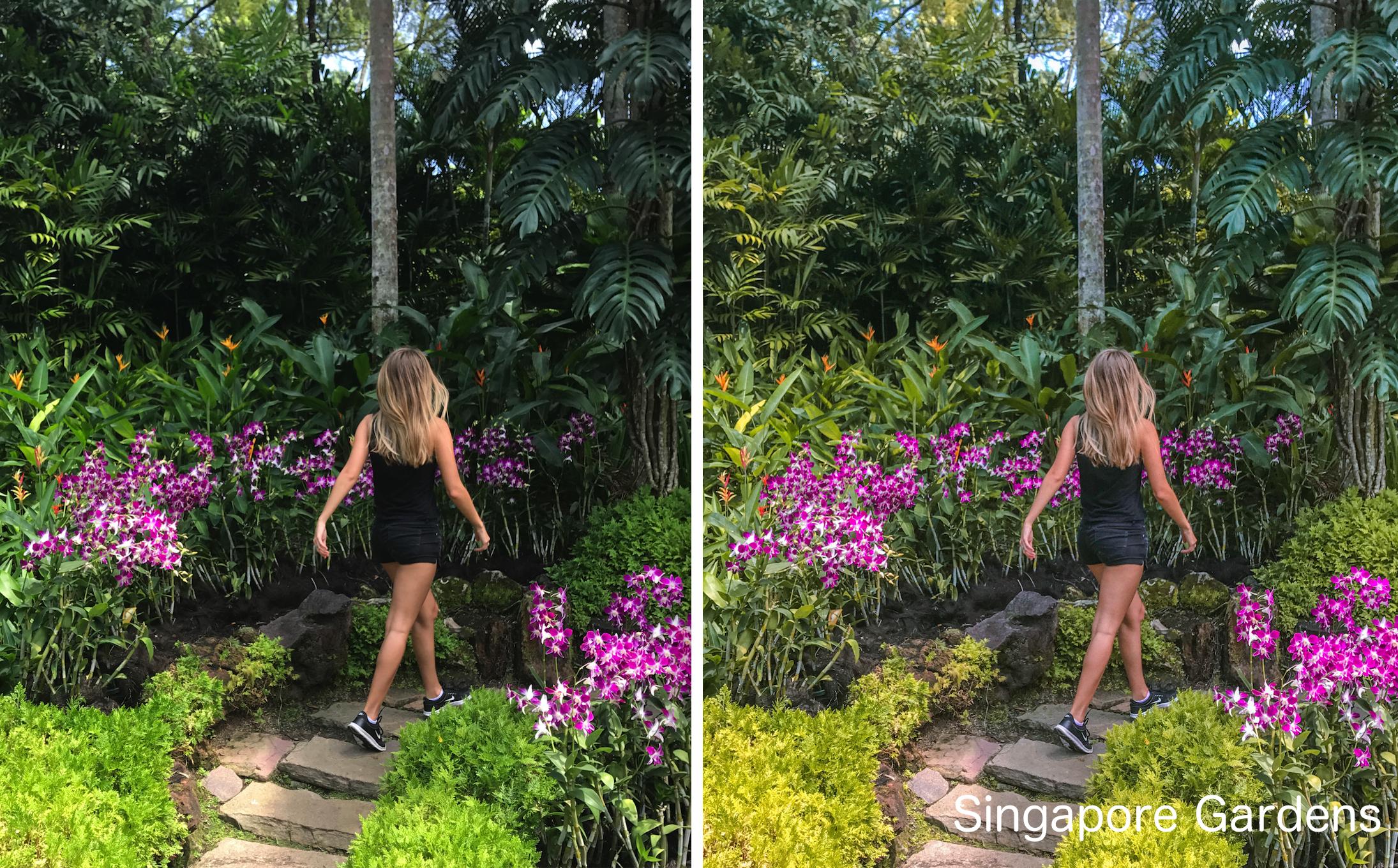 Singapore Gardens.png