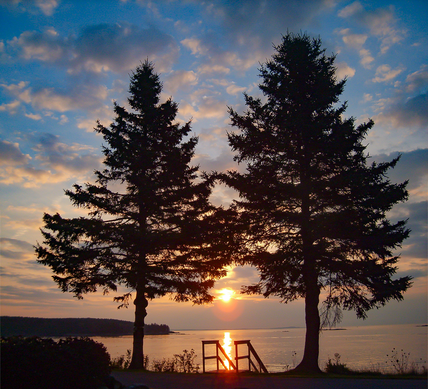 Two Trees at Sunrise, Owls Head, Maine