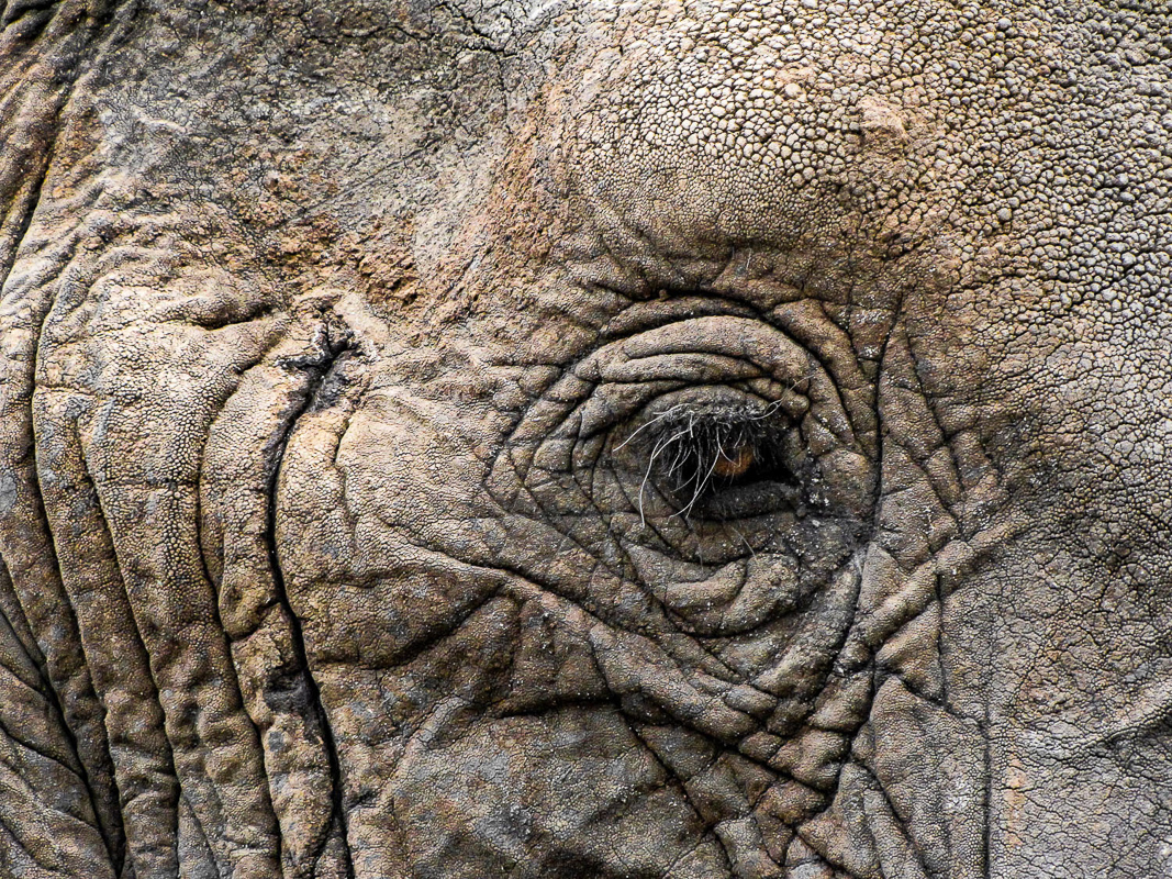 Elephant Eye, Tanzania