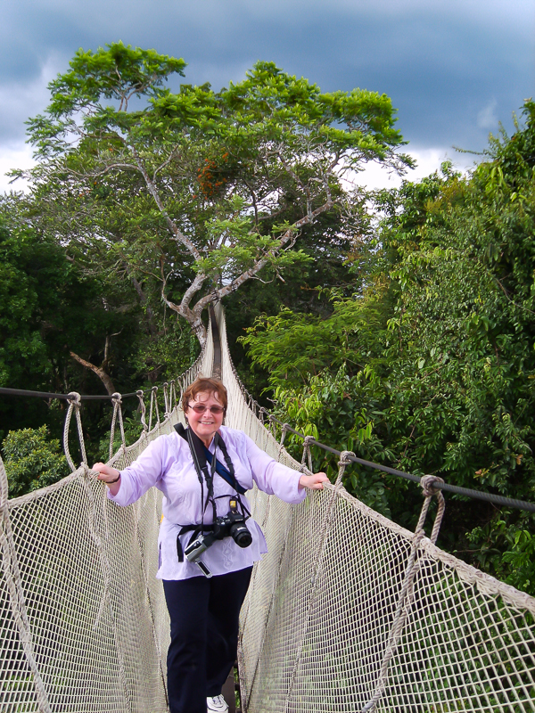 In the treetops in the Amazon.