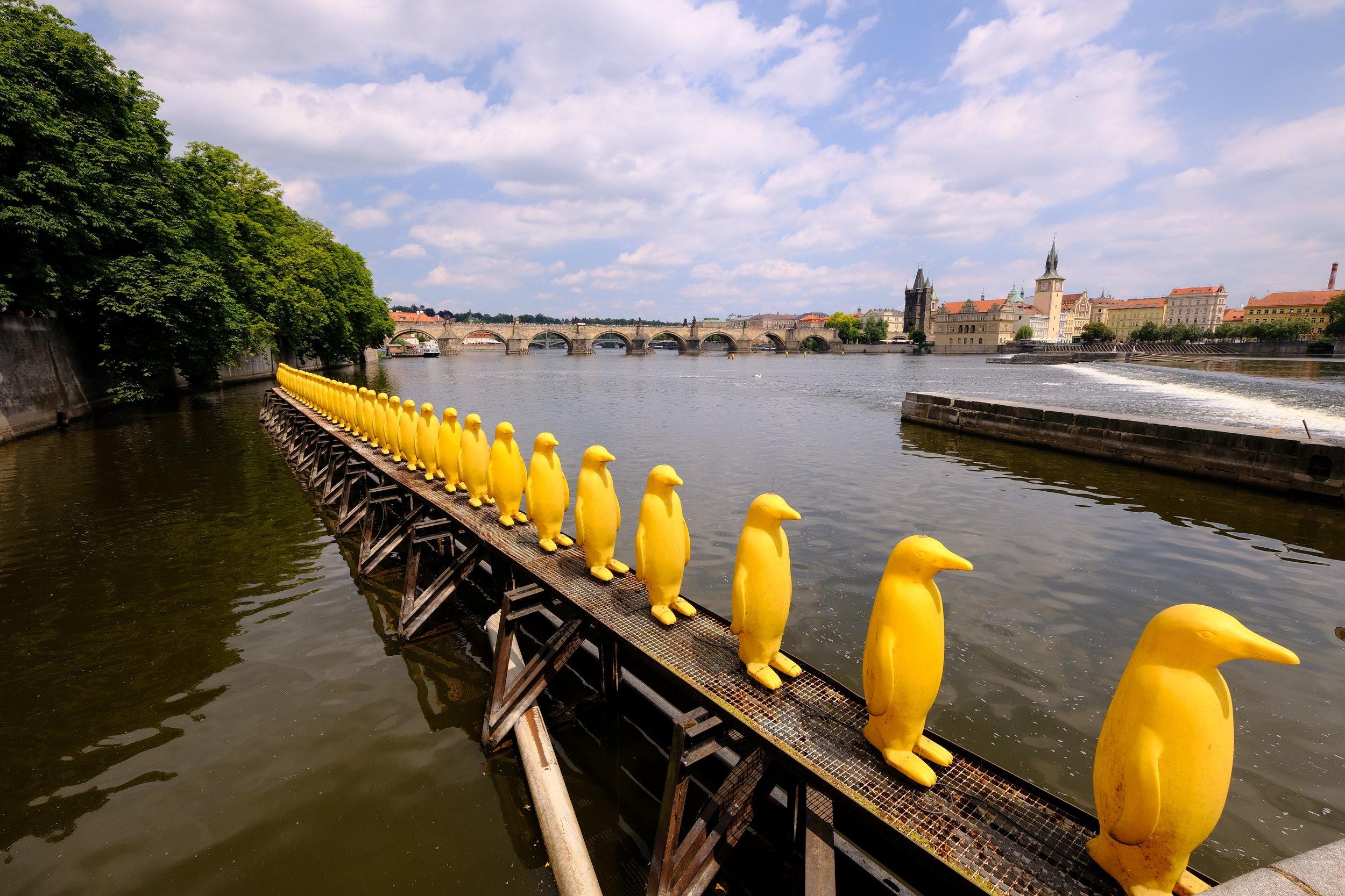 Penguin Sculpture Europe.jpg