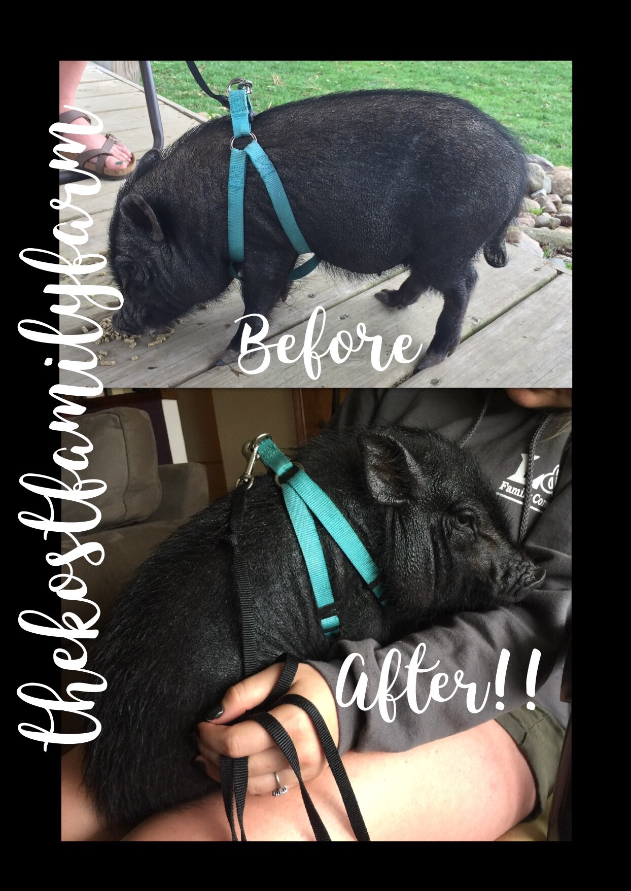 A before & after with Minnie at the Kost Family Farm   -