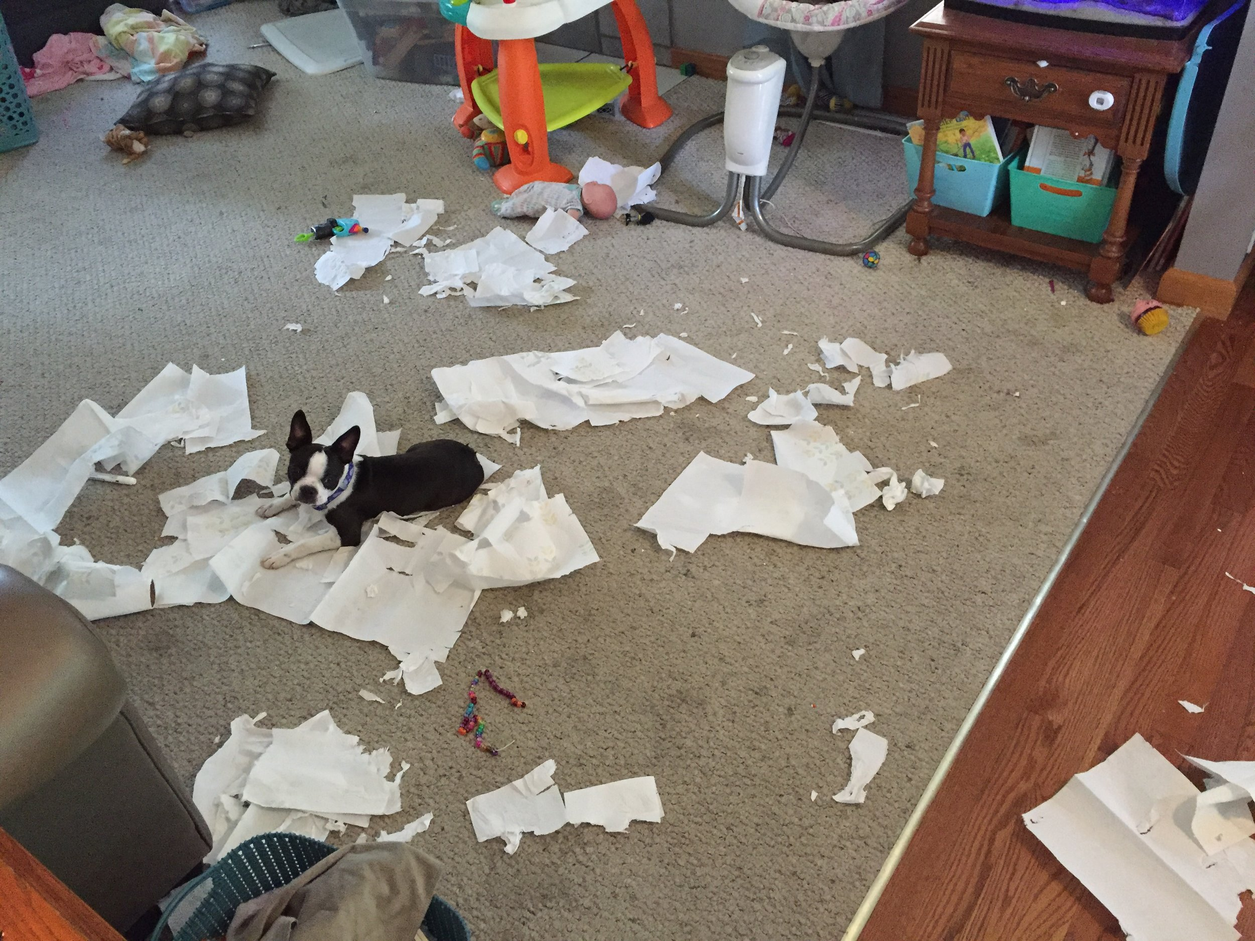 This was a prior paper towel incident. While I was downstairs cleaning the basement, she was upstairs happily uncleaning the family room. Dogs these days. Sheesh.