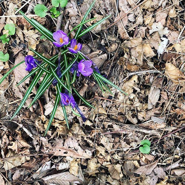 Oh hay, Spring, haaaaayyyy! 💜🎉