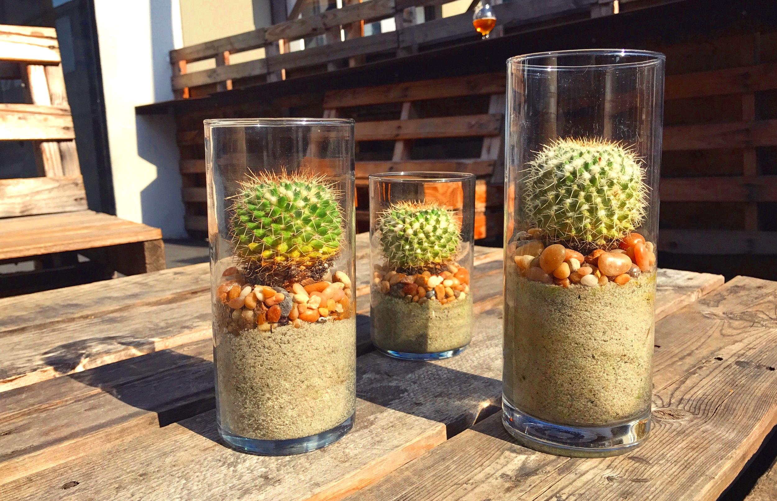 Cacti Trio.JPG