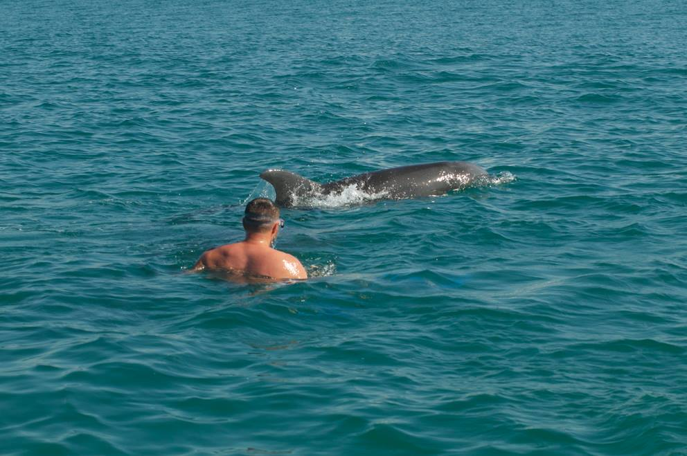 This lucky fellow did get very close to a dolphin! That doesn't always happen but the tours are always great.