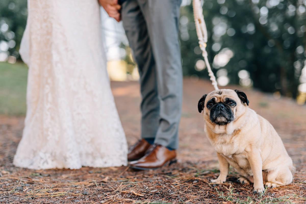Wedding-Photohraphy-Tasmania-Josef-Chromy-54.jpg