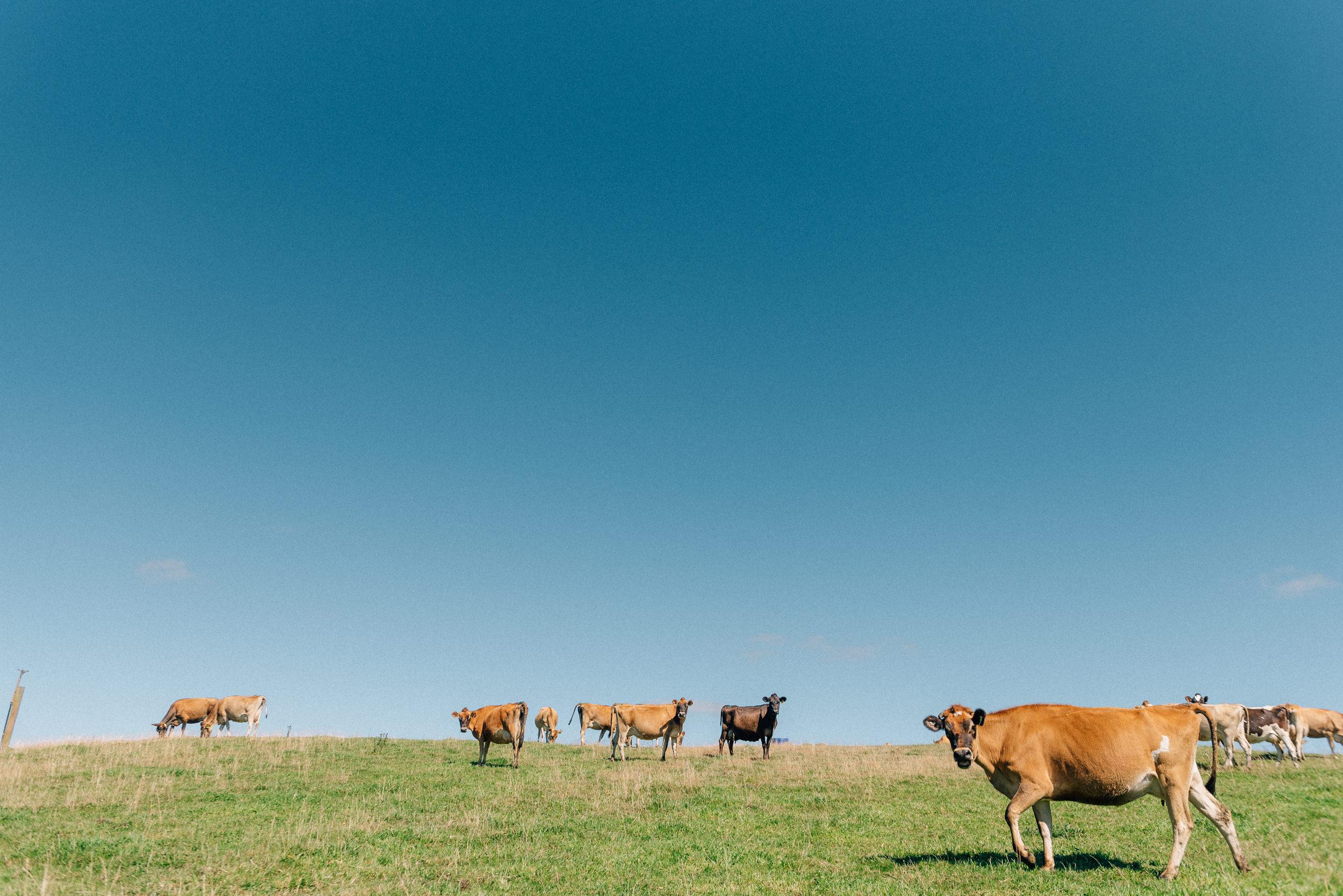 Launceston-Stock-Photography-13.jpg