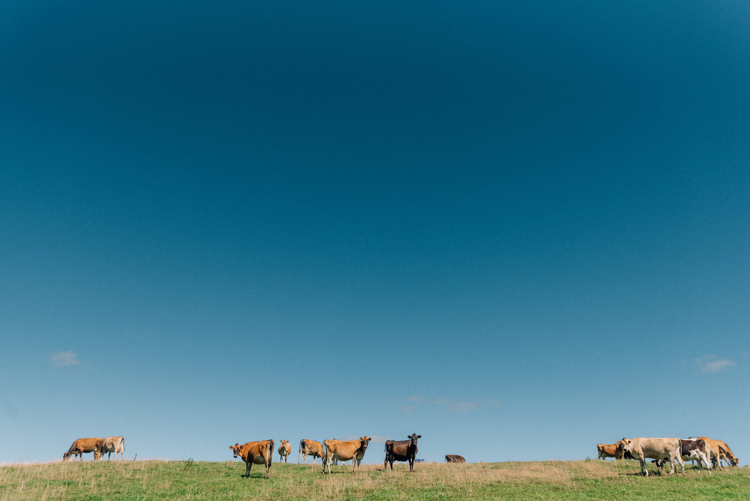 Launceston-Stock-Photography-12.jpg