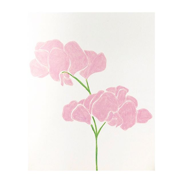 If you've signed up to our mailing list you'll already be in the know ... if not, we're having a SUMMER SALE !! 🌸☀️ 🥳 Stock up on gifts for loved ones or treat yourself for less. Link in bio ☝🏻 We're having a sweet pea moment right now and whilst we perfect our gardening skills here's a lovely illustration by Anna Day from one of our fave flower books @theflowerappreciationsociety #summertime #sale #guiltfree