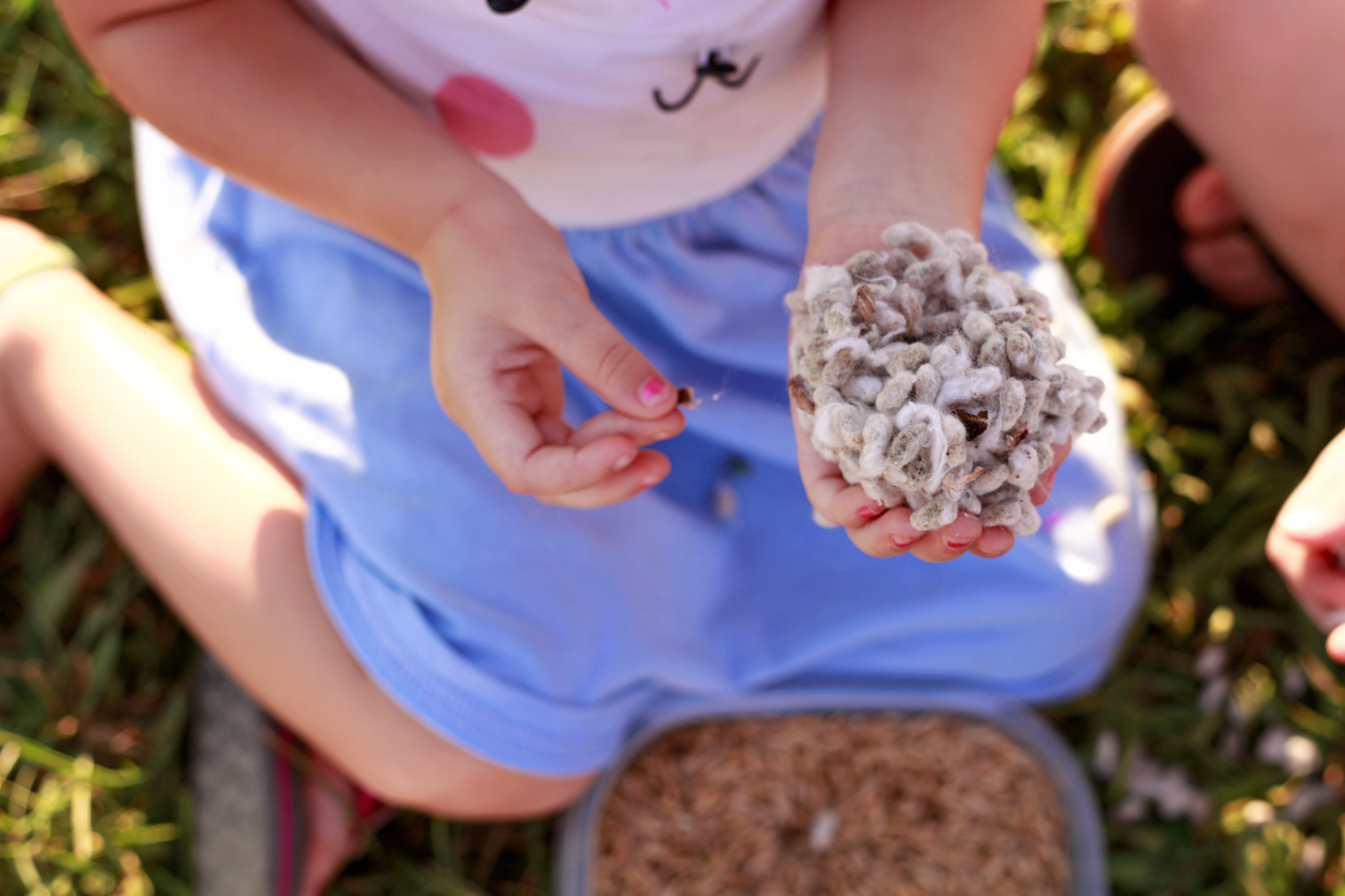 Cotton Seed and hands.jpg