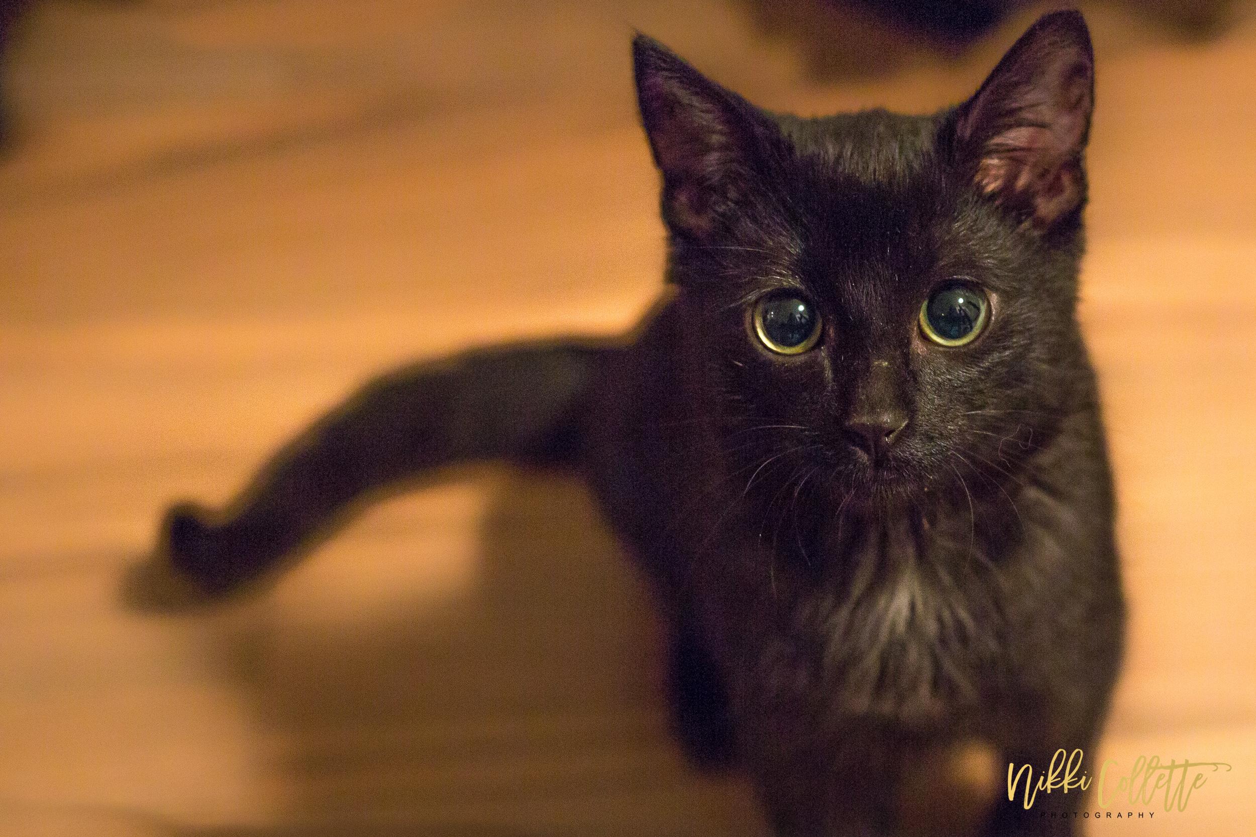 K&T's kitten Salzar