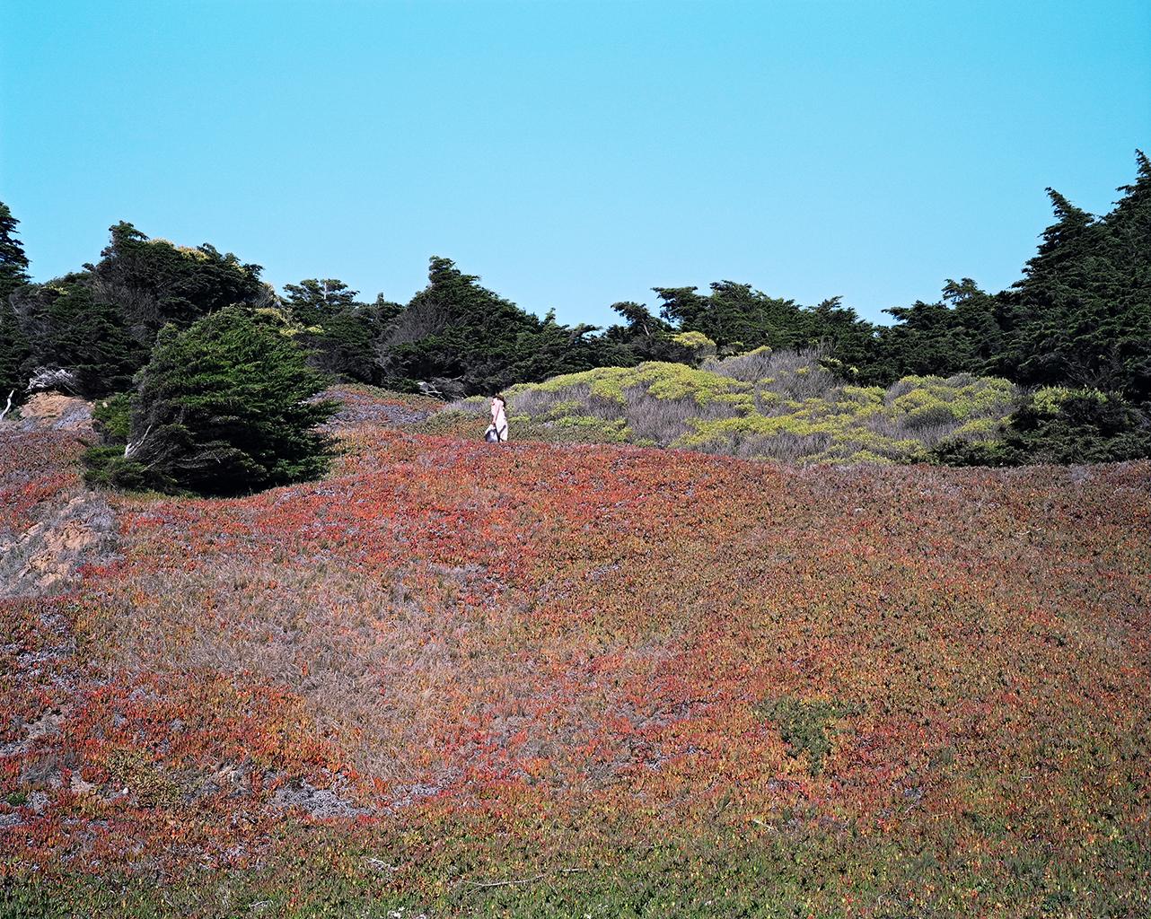 Hillside, San Francisco, 2012
