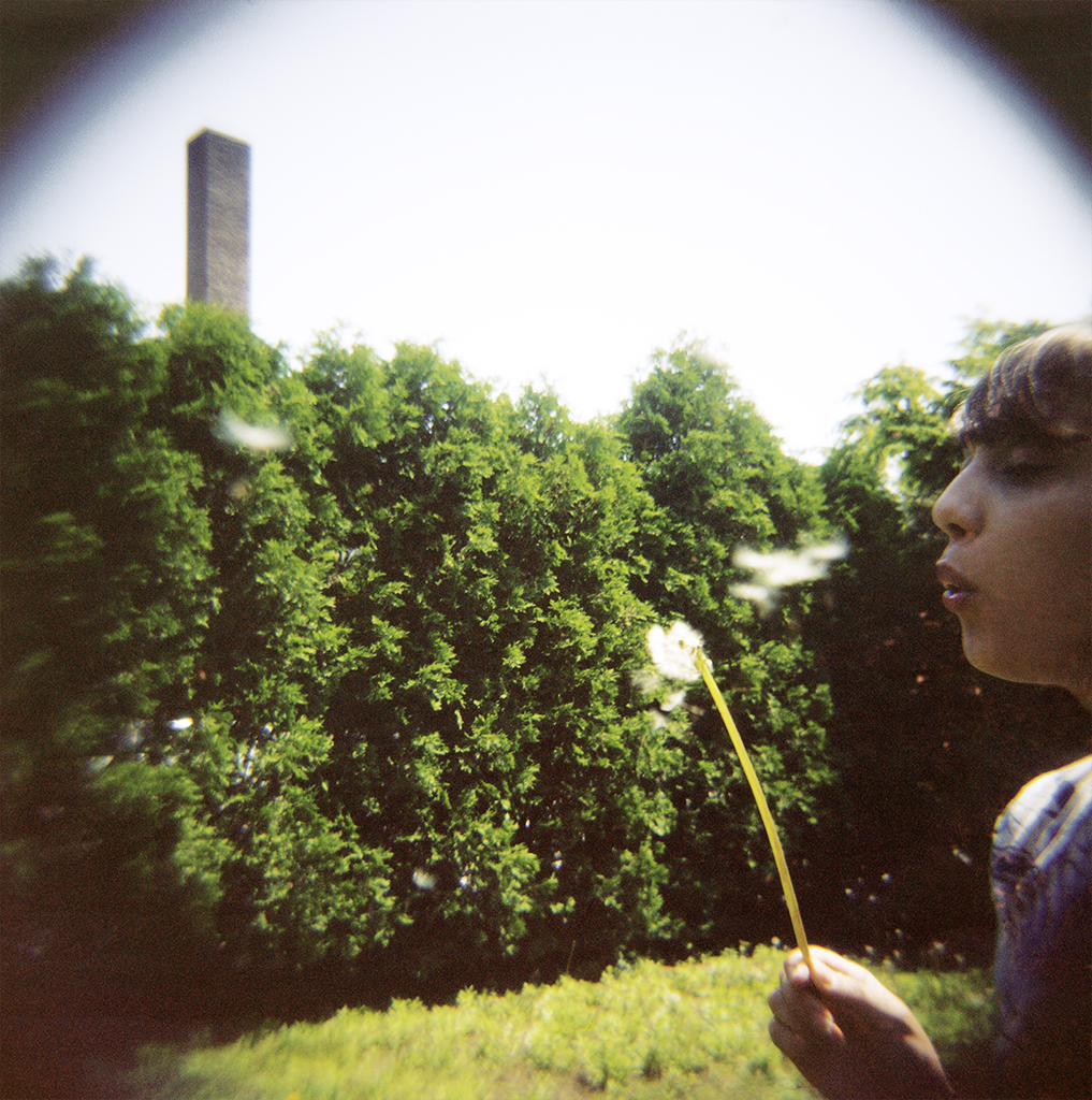 Blowing Dandelions, 2012