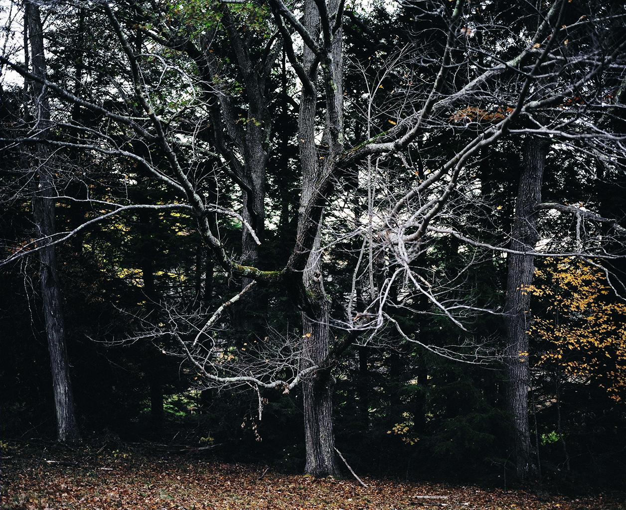 Witch Tree, 2010