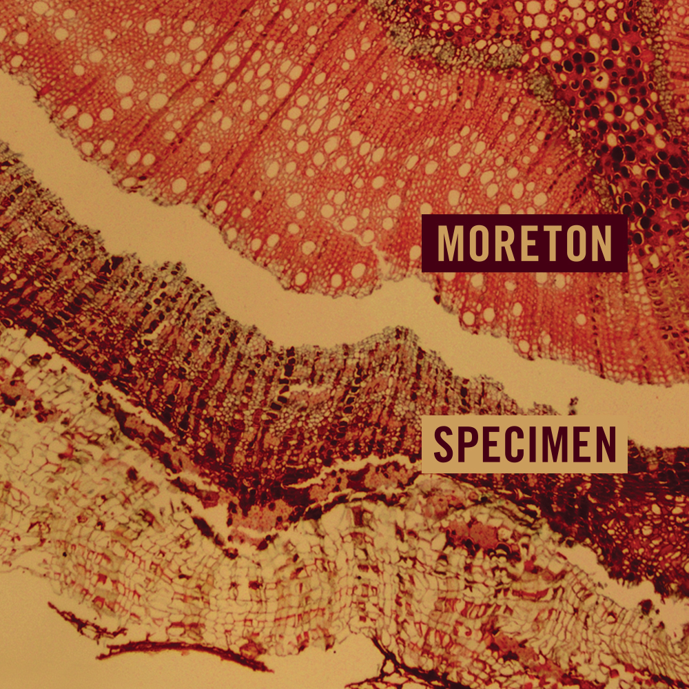Buy/Stream Debut EP 'Specimen' Here!