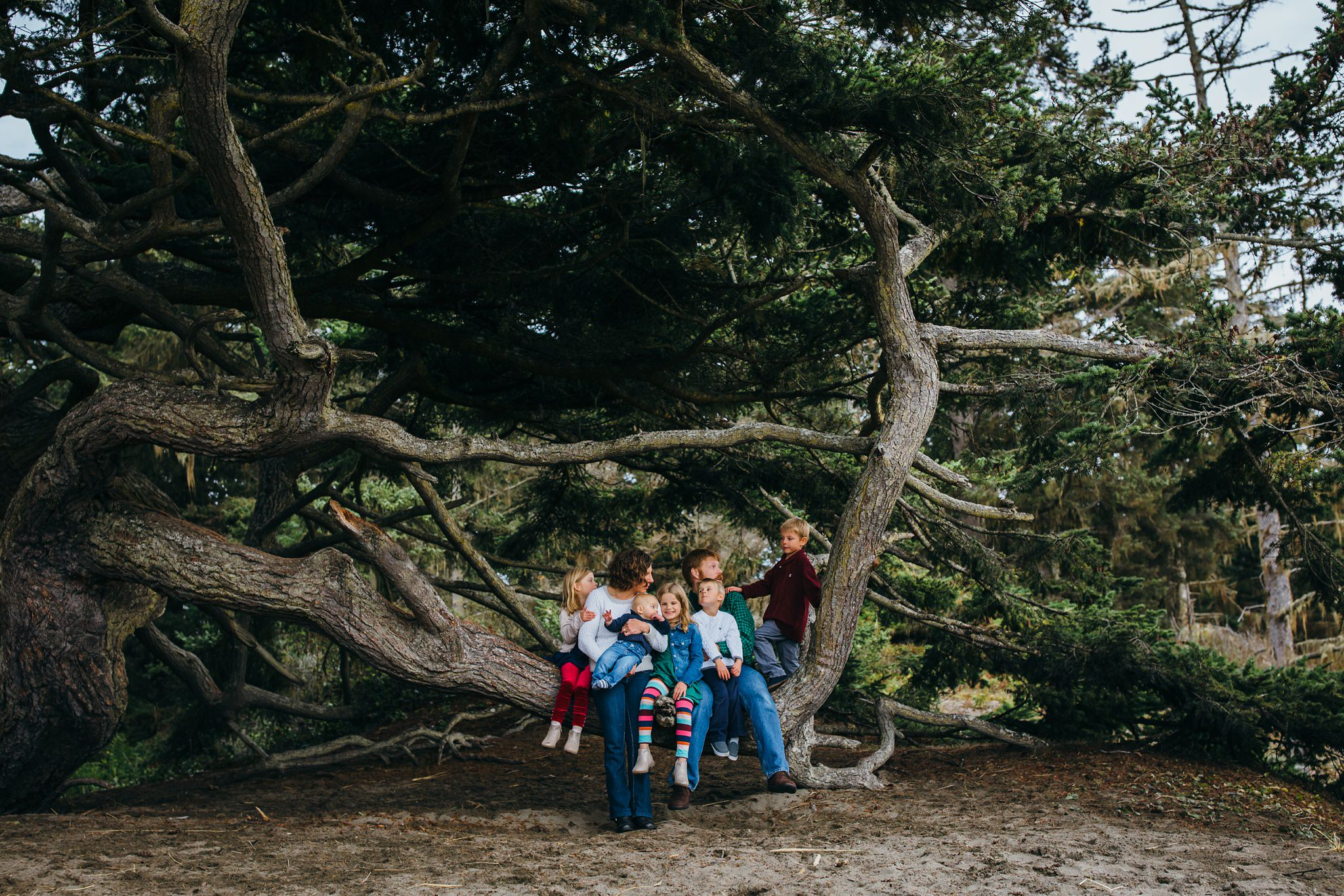 kara chappell whidbey island family photography family sitting in tree at deception pass state park