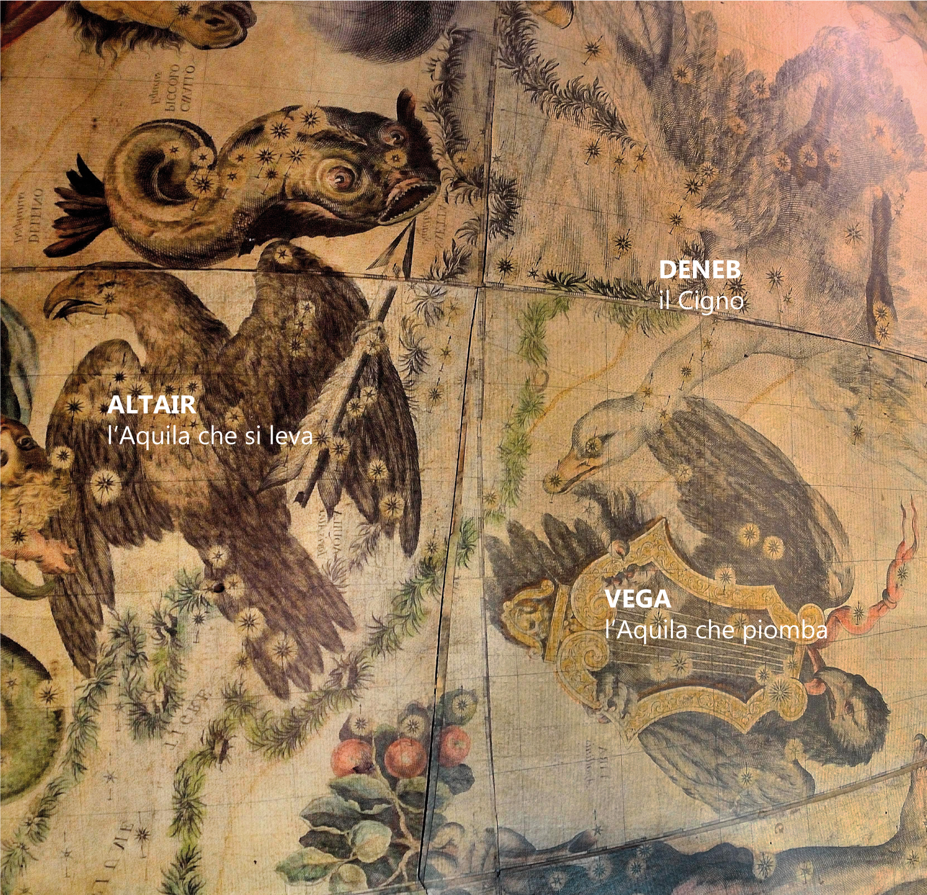 Francesco Coronelli,   Celestial Globe  of 1693 (edition 1803) (immagine rovesciata specularmente / image reversed specularly) Venezia, Museo Storico Navale  Foto: Chiara Enzo and Marta Naturale, 2016