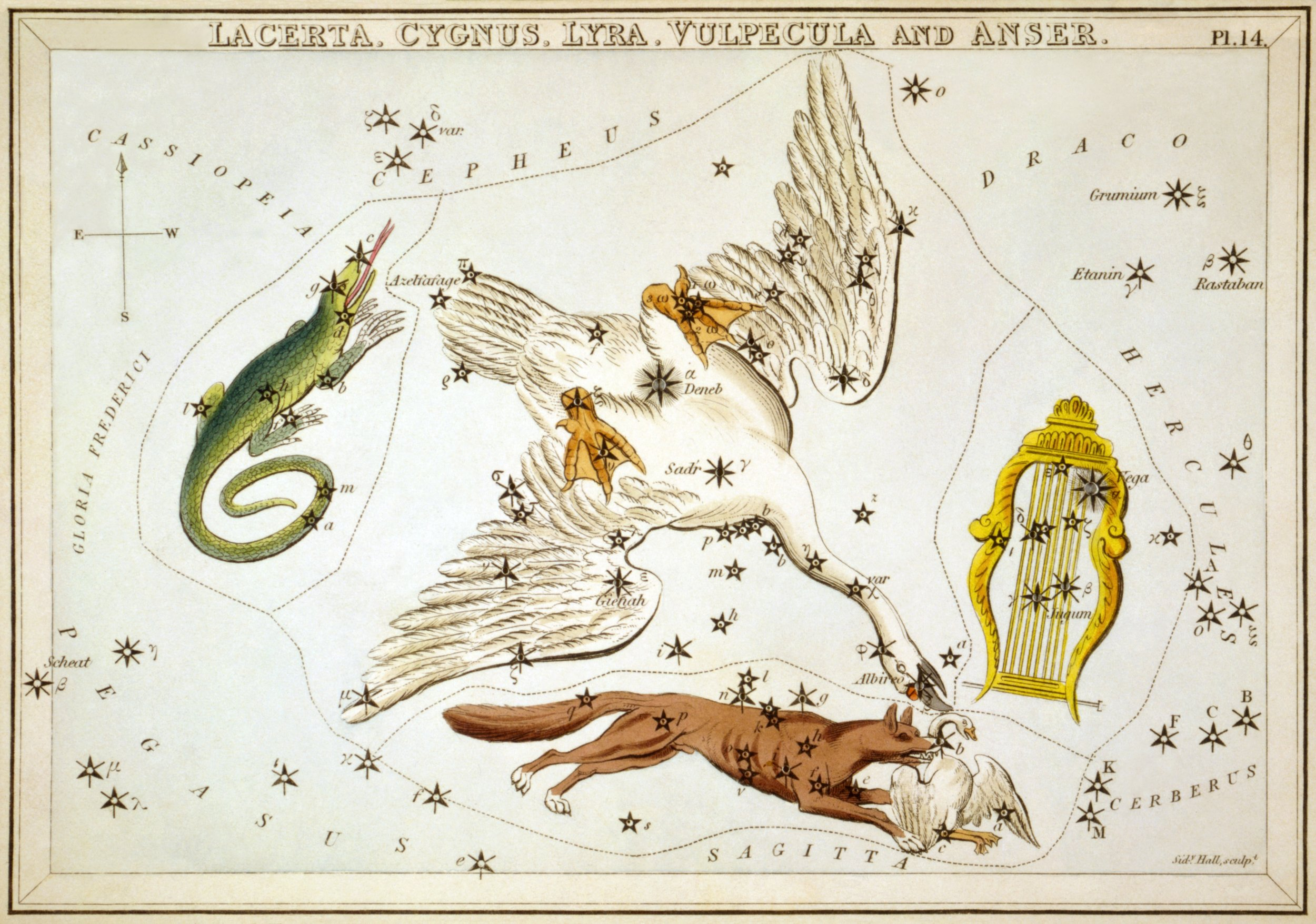 Lacerta, Cygnus, Lyra, Vulpecula and Anser   Da /  From : Sidney Hall,  Urania's Mirror , collezione di 32 stampe /  collection of 32 engravings , London, 1824  Credits: Adam Cuerden via Wikimedia Commons