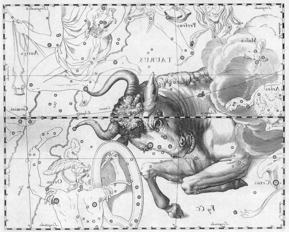 Costellazione del Toro: Aldebaran, le Iadi e le Pleiadi (tra la nuvola e la criniera) / Constellation of Taurus the Bull: Aldebaran, the Hyades and the Pleiades (on the shoulder, by the cloud)    Da / From : Johannes Hevelius, Firmamentum Sobiescianum, sive Uranographia , Gdansk 1690. (Immagine rovesciata specularmente/Image reversed specularly)  Incisione a bulino / Engraving