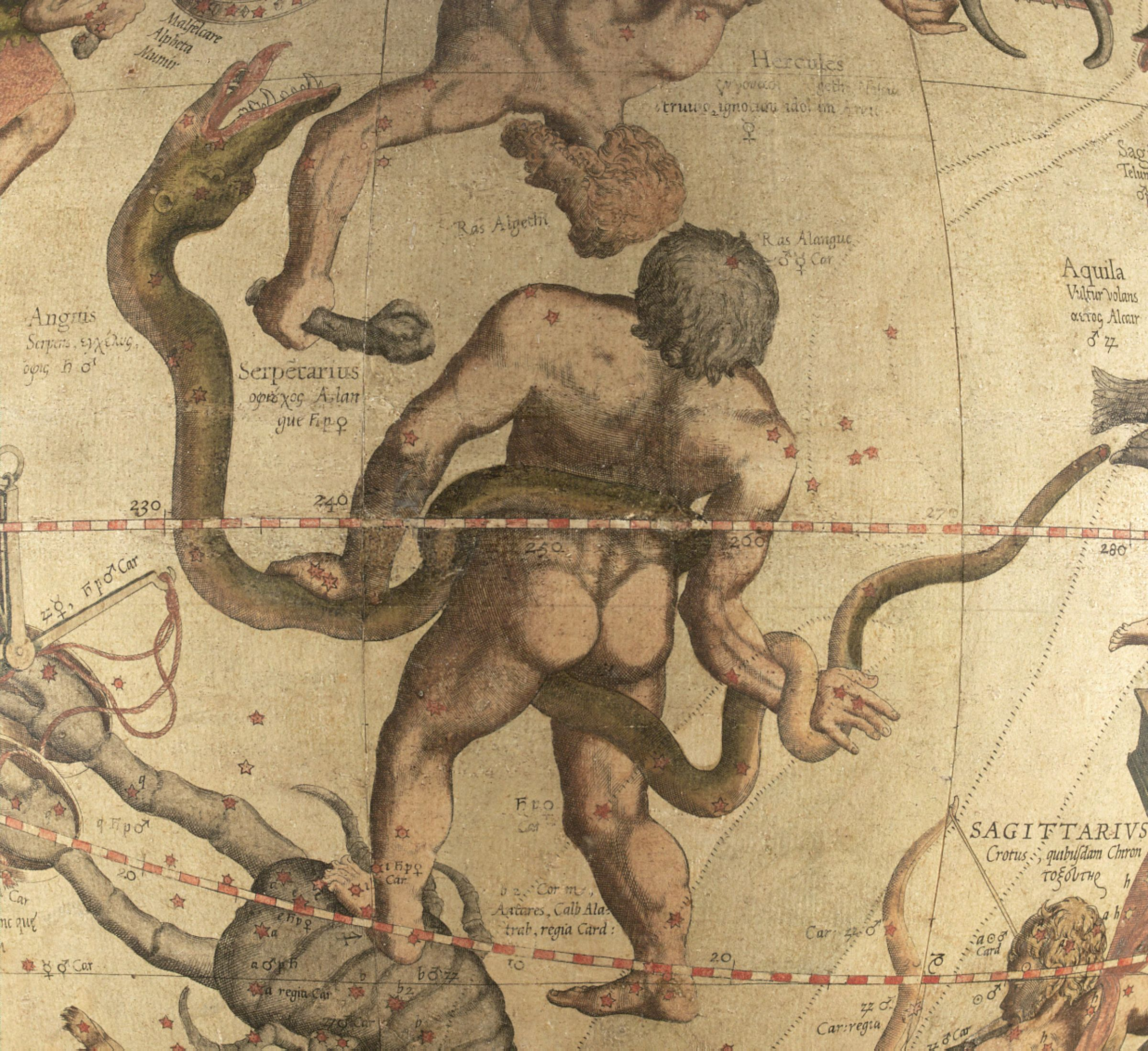 Ofiuco calpesta lo Scorpione . Da: Gerardus Mercator, Globo Celeste, 1551.  Cambridge (Mass.), The Mercator Globes at Harvard Map Collection, via Wikimedia Commons