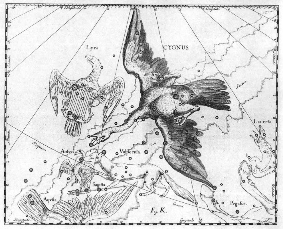 Johannes Hevelius, Constellation  Cygnus , from  Firmamentum Sobiescianum  sive  Uranografia , Gdansk 1690