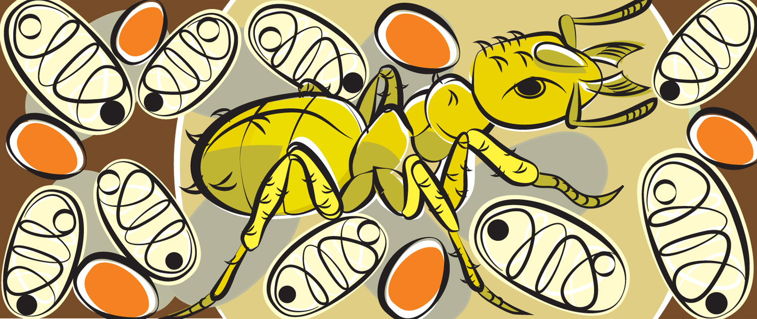 The Yellow Ant