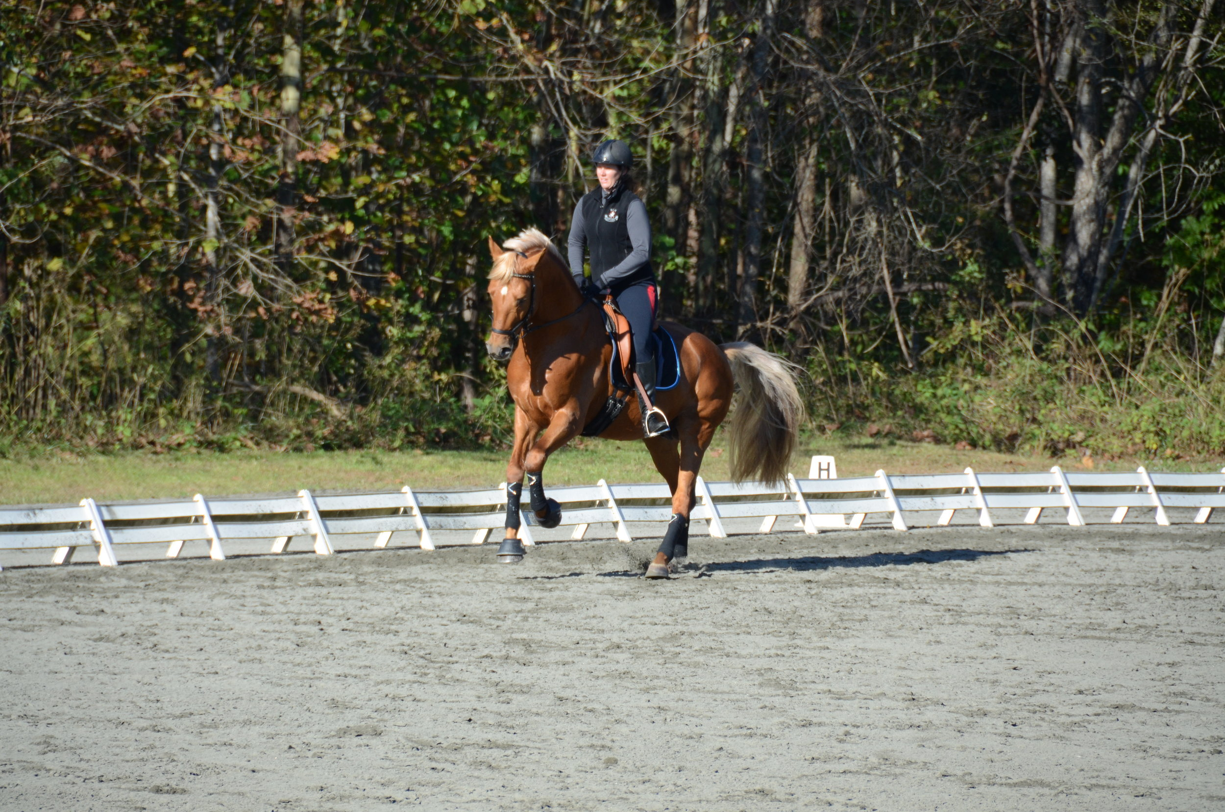 RIDER POSITION AND AWARENESS – YVONNE BARTEAU